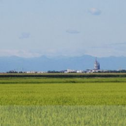 Novara and its rice fields